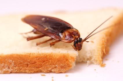 Cucarachas en el hogar.