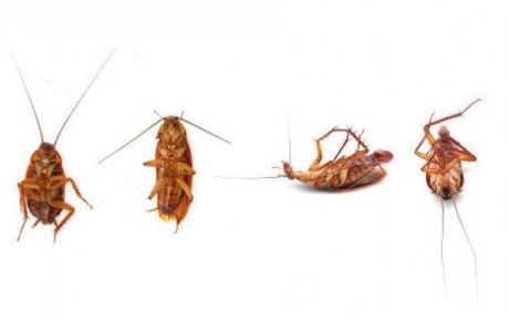 cucarachas en el hogar
